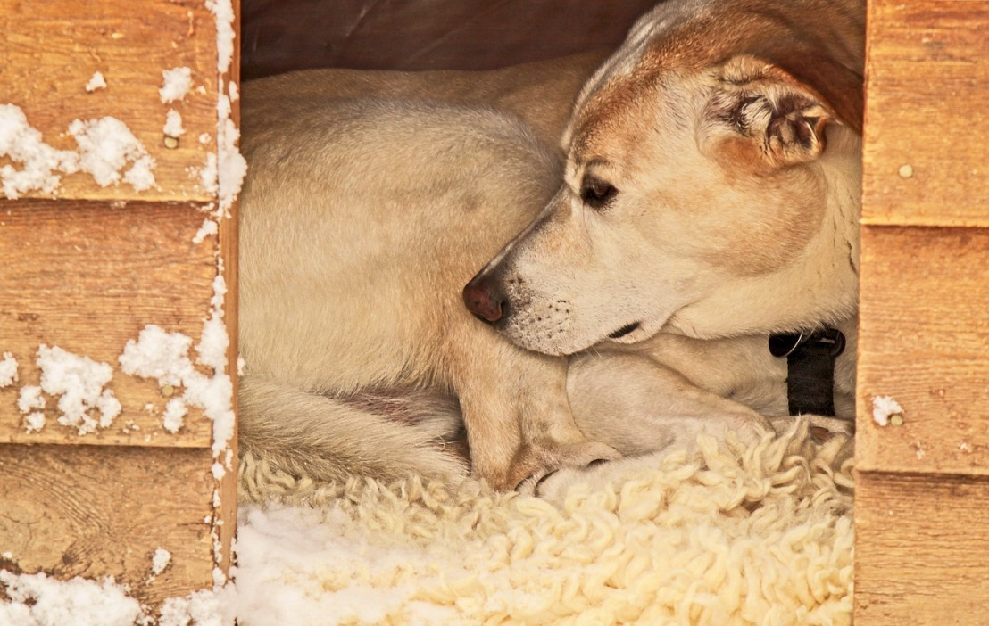 Comment fabriquer une niche pour chien?