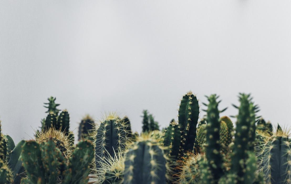 cacti-1834749_1280
