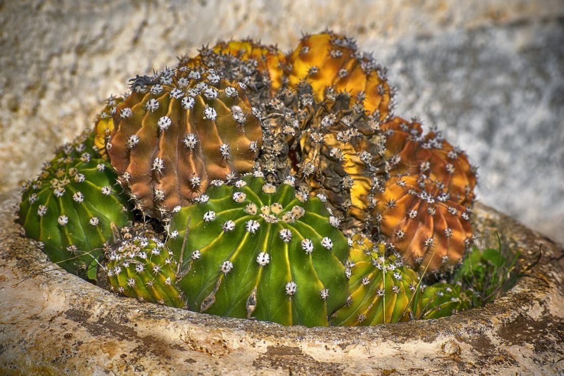 cactus-3829985_1280