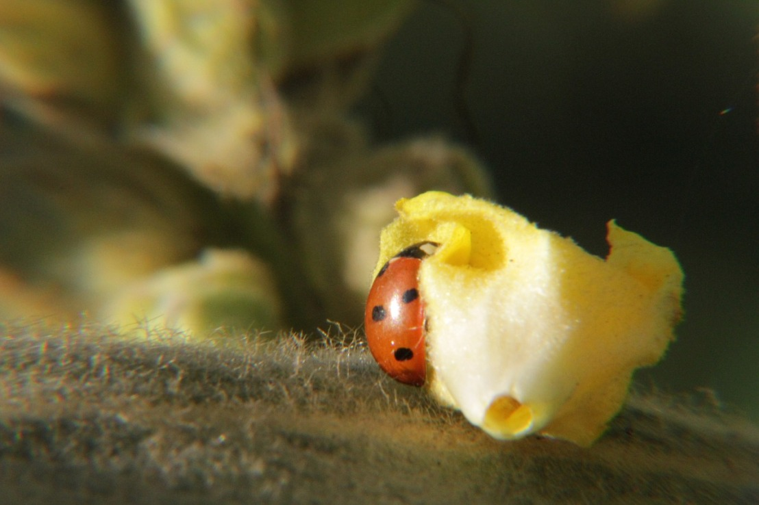 ladybug-196297_1280(3)