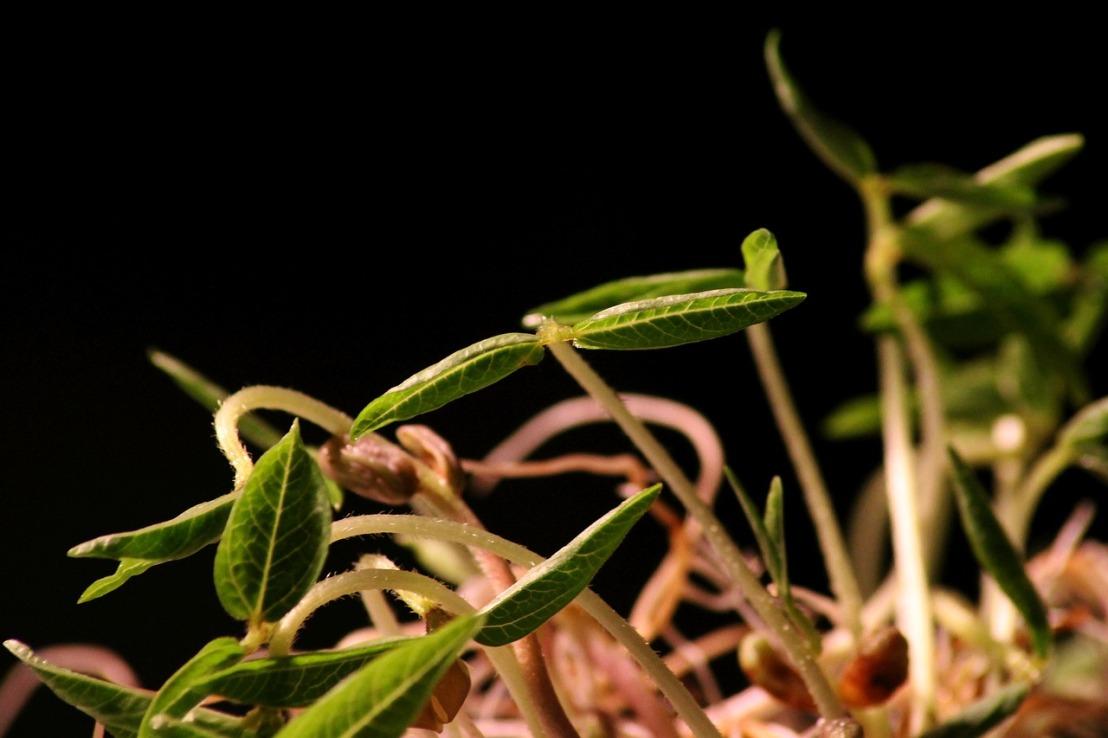 seedling-4121696_1280