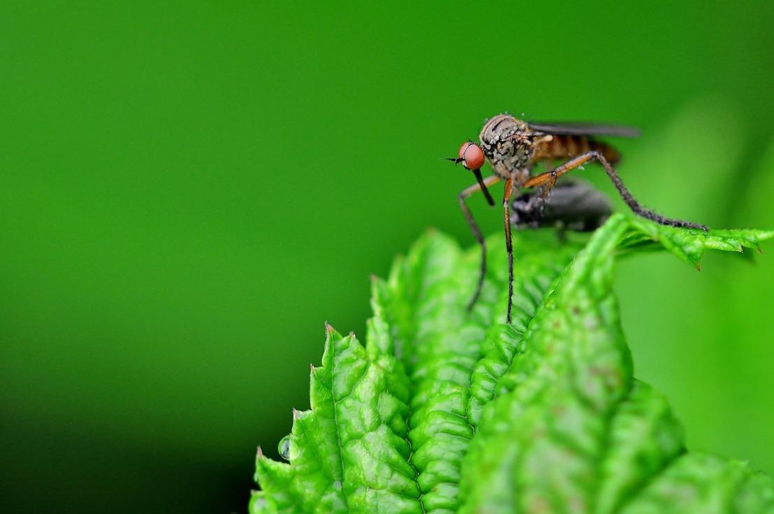 Quelles sont les plantes anti-moustiques?