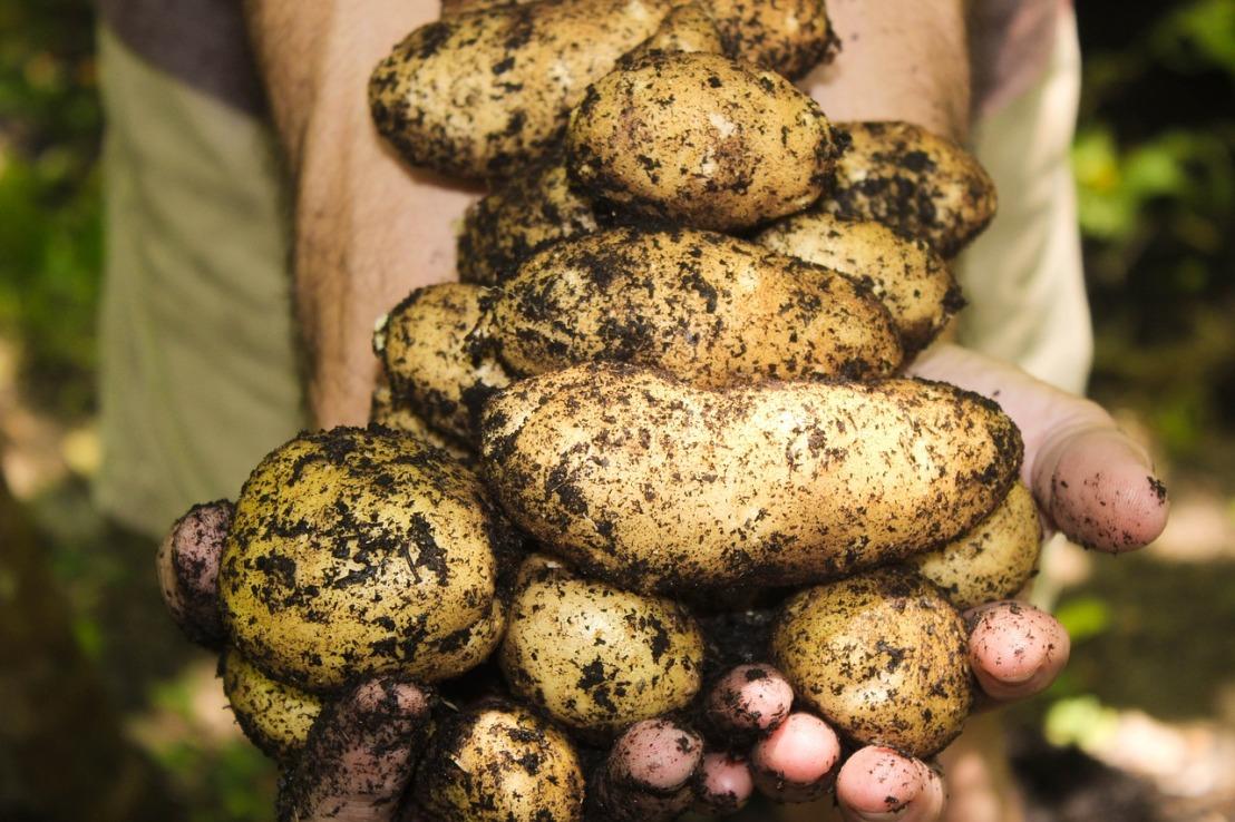 potatoes-1866415_1280